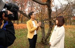 Sắc màu Nhật Bản - Khoảnh khắc phía sau ống kính tại tỉnh Aomori