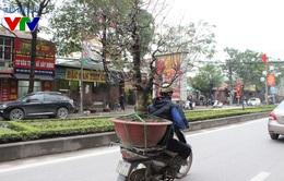 Người dân Hà Nội tấp nập sắm đào, quất đón Tết