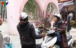 Đào Nhật Tân rớt giá thê thảm, bày bán khắp phố sau dịp Tết