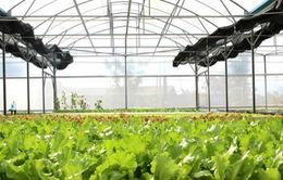 Ứng dụng công nghệ cao để tái cơ cấu nông nghiệp