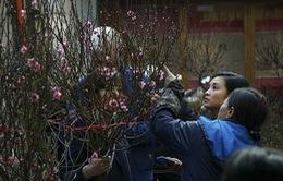 Nắng lên, chợ hoa Hàng Lược nhộn nhịp người sắm Tết