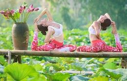 Tạo dáng yoga đẹp mắt bên hồ sen của cô gái Hà thành