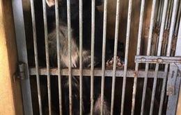Nuôi nhốt và buôn bán động vật hoang dã ngày một gia tăng