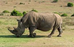 Nhiều quyết sách quan trọng nhằm quản lý các hoạt động buôn bán quốc tế động vật hoang dã