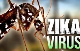 Lãnh đạo TP HCM kiểm tra công tác phòng chống dịch Zika