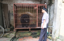 Chuyển giao một cá thể gấu nuôi nhốt bất hợp pháp về trung tâm cứu hộ