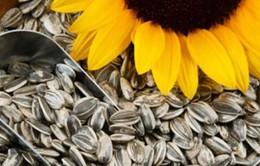 Lợi ích sức khỏe và dinh dưỡng của hạt hướng dương