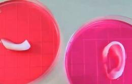 Công nghệ 3D in xương sụn nhân tạo