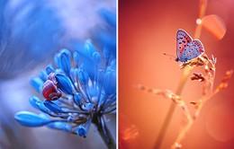 Chiêm ngưỡng thiên nhiên huyền ảo qua ống kính macro