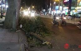 TP.HCM: Nhánh cây gãy đè trúng người đi đường