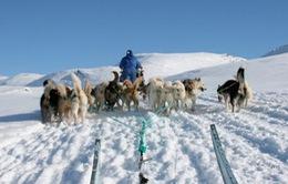"""Băng tan nhanh làm thay đổi cuộc sống """"bộ tộc người tuyết"""" ở Bắc Cực"""
