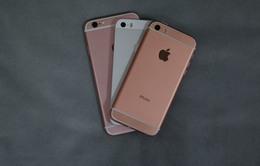 iPhone SE xuất hiện tràn lan tại thị trường Trung Quốc?