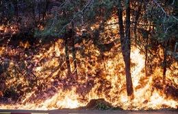 Cháy rừng nghiêm trọng tại Israel, khoảng 50.000 người phải sơ tán