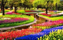 Công viên hoa lớn nhất châu Âu mở cửa đón khách