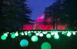 Không khí Giáng sinh lộng lẫy ở Vườn thực vật hoàng gia Kew