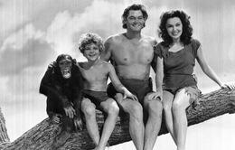 Những chuyện lạ về loài khỉ