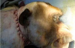 Bác sĩ Italy tuyên bố cấy ghép đầu khỉ thành công