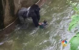 Tranh cãi về việc giết khỉ đột để cứu em bé tại Mỹ