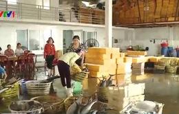 Giải pháp nào cho hải sản đông lạnh tồn kho sau sự cố Formosa?