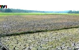 Miền Trung đối mặt với khô hạn và thiếu nước