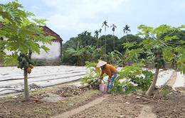 Nhiều nông dân trắng tay, nợ nần vì mưa lũ liên tiếp ở miền Trung