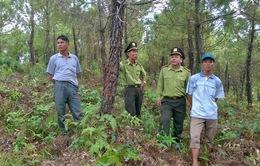 Kiểm tra công tác phòng, chống cháy rừng tại nhiều địa phương