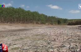 Nghìn hecta cây trồng ở Kon Tum bị khô cháy vì nắng hạn