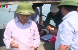 Thành lập 6 tổ công tác kiểm tra toàn diện vấn đề môi trường tại Vũng Áng