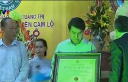 Quảng Trị tiếp nhận 4 Kỷ lục Việt Nam