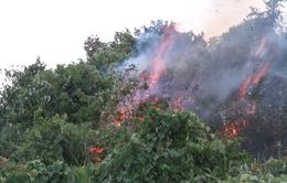 Đà Nẵng: Cơ bản khống chế vụ cháy lớn tại rừng Nam Hải Vân