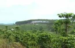 Lâm Đồng kiên quyết thu hồi diện tích đất lâm nghiệp bị lấn chiếm
