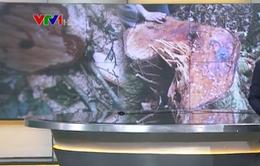 Lâm Đồng truy bắt nhóm đối tượng phá rừng