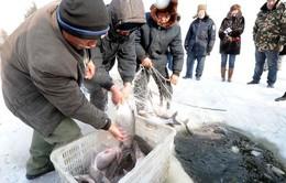 Lễ hội bắt cá mùa đông ở Hắc Long Giang