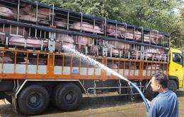 Cục Chăn nuôi khuyến cáo không nên tăng đàn lợn bằng mọi giá