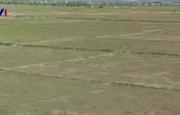 26.000ha đất lúa phải ngừng sản xuất vụ Đông Xuân
