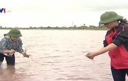 Thái Bình: Gần 50.000ha lúa ngập trắng do bão số 1