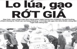 Điểm báo 13/5: Thái Lan xả 11 triệu tấn gạo, gạo Việt lo rớt giá