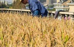ADB hỗ trợ Campuchia phát triển nông nghiệp