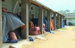 Bình Định: Tồn đọng 400 tấn lúa giống vì DN chậm thu mua