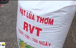 Phù phép lúa thương phẩm thành lúa giống chất lượng cao