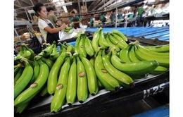 Cảnh báo DN Việt bị lừa tiền khi xuất khẩu trái cây sang UAE