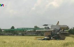 Thái Lan có kế hoạch bán hết gạo dự trữ trong 2 tháng