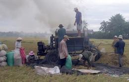 Coi trọng nhân rộng mô hình nông dân sản xuất giỏi