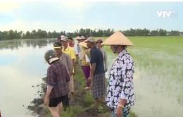 Mâu thuẫn tôm-lúa ở Kiên Giang: Cán bộ Nhà nước ngang nhiên làm trái quy định