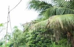 Nghệ An: Thị xã Thái Hòa đạt nông thôn mới có lưới điện... cũ