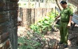 Quảng Nam: Phát hiện vườn cần sa sau tiệm cắt tóc