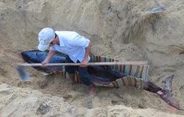 Mai táng cá heo hơn 300kg dạt vào bờ biển Quảng Ngãi