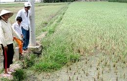 Cần Thơ chưa có nguồn nước dự phòng khi mặn xâm nhập