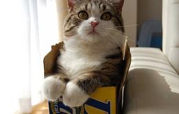 Mèo giúp giảm căng thẳng trong mùa thi