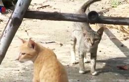 Nỗi lo khi làng không còn nuôi mèo